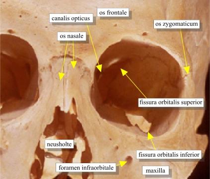 fissura orbitalis